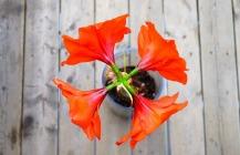 flower-217-140