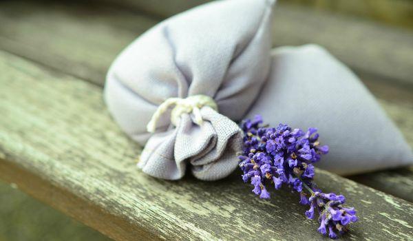 lavender-600-350
